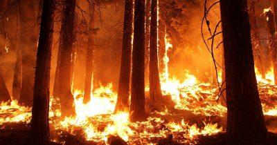 WWF: Απολογισμός αντιπυρικής περιόδου & αυτοψία στην Εύβοια