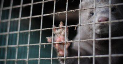 Τη νεκρανάσταση του κλάδου της γούνας με επιδότηση - πρόκληση επιχειρεί η κυβέρνηση, όταν η κατάργησή της είναι παγκοσμίως μονόδρομος