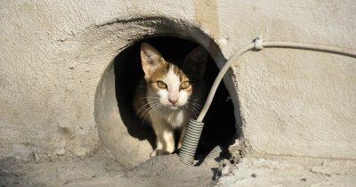 Τα εγκλήματα εις βάρος των ζώων συνεχίζονται