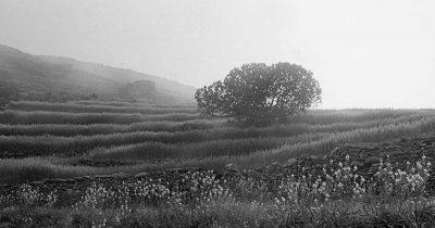 «Ταπεινός Παράδεισος» - Έκθεση της Ευγενίας Κουμαντάρου στο Μουσείο Μπενάκη