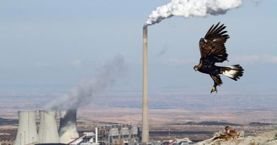 Η Ευρώπη αποτυγχάνει να αποτρέψει την καταστροφή της φύσης: Τα τελευταία πέντε χρόνια η κατάσταση του περιβάλλοντος επιδεινώθηκε