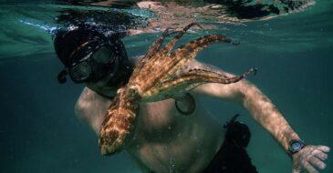Παγκόσμια πρεμιέρα του ντοκιμαντέρ «Τι μου έμαθε ένα Χταπόδι» στη Θεσσαλονίκη