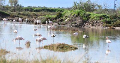 Οικολογική Κίνηση Πάτρας: Πρόσκληση συμμετοχής σε έκθεση φωτογραφίας με θέμα «Η άγρια πανίδα της Ελλάδας»
