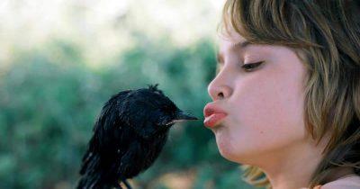 «Το αγόρι με την καλιακούδα»: Η αλληλοεξημέρωση ανάμεσα σ' έναν άνθρωπο κι ένα πουλί