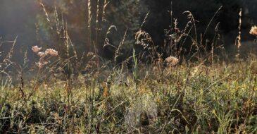 Δήμος Πατρέων. Νέα έκκληση για τον καθαρισμό οικοπέδων από ξερά χόρτα για την αποφυγή πυρκαγιών