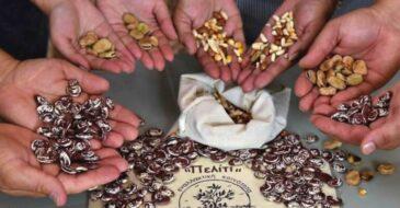 Έκκληση για σπόρους στη Βηρυτό από το Πελίτι