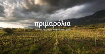 Αίγιο: Πρώτη ανοιχτή προβολή του ντοκιμαντέρ «Πριμαρόλια. Το ταξίδι της μαύρης σταφίδας στον χρόνο»