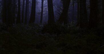 Τα σκοτεινά δάση