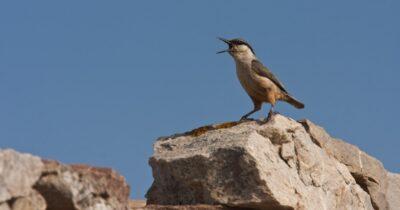 «Click στη φύση!» - Φωτογραφικός διαγωνισμός για την ανάδειξη των περιοχών Natura 2000