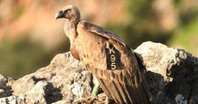 Ο Κ95 βολτάρει στα βουνά της Κρήτης