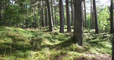 Αίτημα οργανώσεων προς ΥΠΕΝ για τους δασικούς χάρτες
