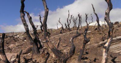 Τα πρώτα στοιχεία της έρευνας για τα οικονομικά στη δασοπυροπροστασία οδηγούν σε… καμένη γη