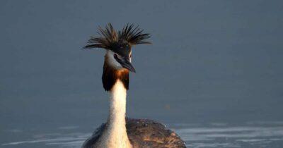 Μεσοχειμονιάτικες Καταμετρήσεις Υδρόβιων Πουλιών