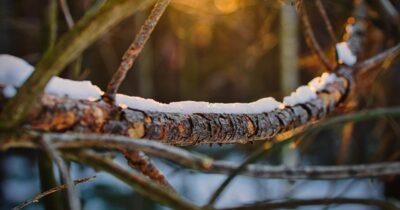 Χιονισμένο πρωινό