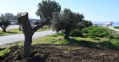 Ο Δήμος Πατρέων… πρασινίζει ακόμα πιο πολύ το Νότιο Πάρκο