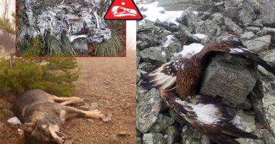 Τέλος στη δηλητηρίαση της άγριας ζωής ζητούν με επιστολή τους Περιβαλλοντικές Οργανώσεις και φορείς