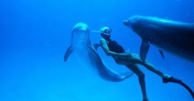 Δωρεάν Προβολή της ταινίας Dolphin Man από το Διεθνές Φεστιβάλ Κινηματογράφου της Αθήνας
