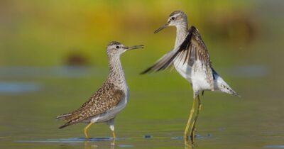 Να σταματήσει άμεσα η καταστροφή των προστατευόμενων εκτάσεων του ποταμού Ερασίνου