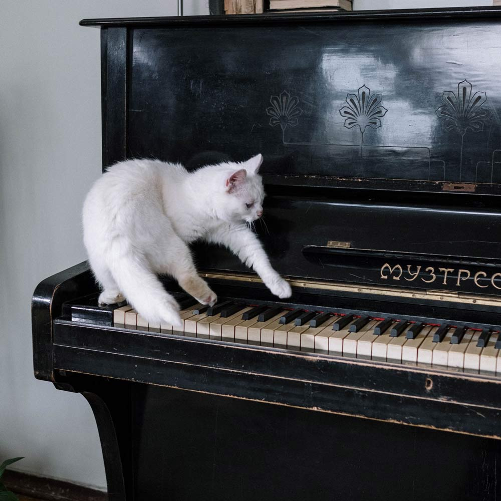 animal in piano