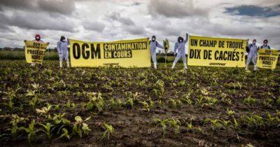 Greenpeace: Τα νέα μεταλλαγμένα που έχουν δημιουργηθεί με τροποποίηση γονιδιώματος εμπίπτουν στην υπάρχουσα ευρωπαϊκή νομοθεσία περί μεταλλαγμένων οργανισμών