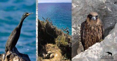 Εμβληματική Νίκη για τις νησίδες του Ν. Αιγαίου & τη βιοποικιλότητα του νησιωτικού χώρου