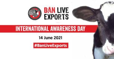 ΠΦΠΟ: Συμμετέχουμε στην Παγκόσμια Διαδικτυακή Διαδήλωση Ban Live Exports