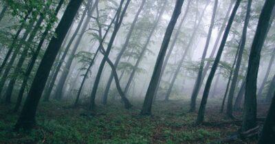 5η Ιουνίου: Παγκόσμια Ημέρα Περιβάλλοντος «Ο Σ.Π.Ο.Α.Κ. καλεί σε επαγρύπνηση»