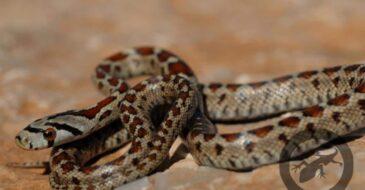Τα φίδια της Ελλάδας - Ας προστατεύσουμε τη φύση και τα άγρια ζώα