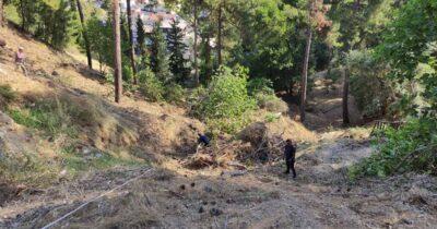 Πάτρα: Απομάκρυνση κομμένων δέντρων και καθαρισμός στο Δασύλλιο