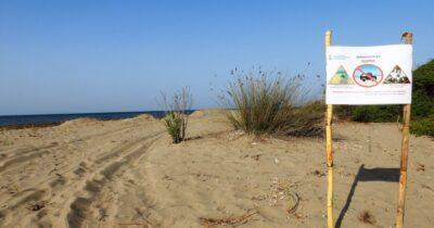 Τα χελωνάκια έκαναν την εμφάνισή τους στο Εθνικό Πάρκο Μεσολογγίου αλλά τα τροχοφόρα συνεχίζουν να κινούνται στις παραλίες