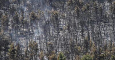 Οριοθετημένη η πυρκαγιά στα Βίλια σύμφωνα με την Πυροσβεστική Υπηρεσία